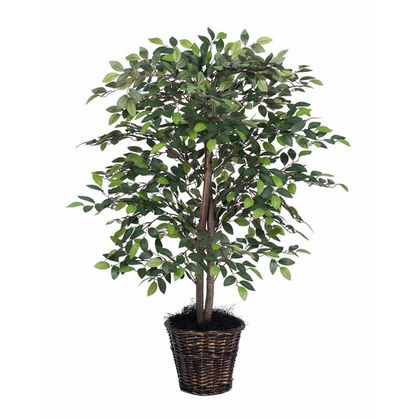 Mini Ficus Tree in Basket by Three Posts