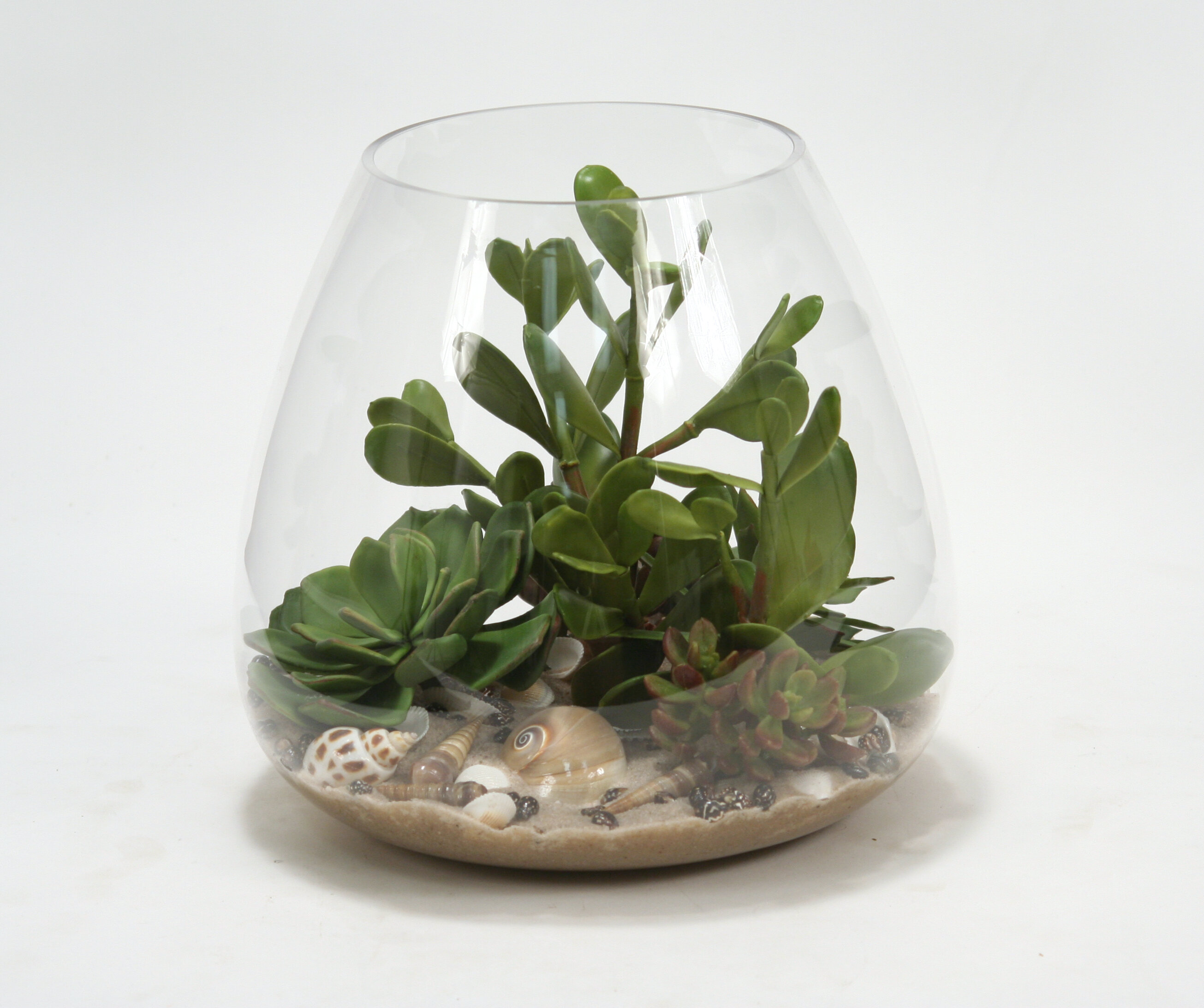 Ivy Bronx Succulents Sand And Shells Desk Top Plant In Terrarium