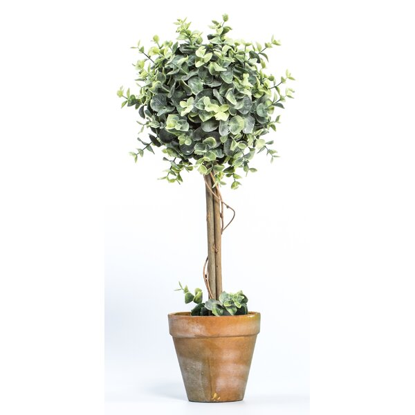 Broad Leaf Single Flowering Topiary in Pot by Ragon House Collection