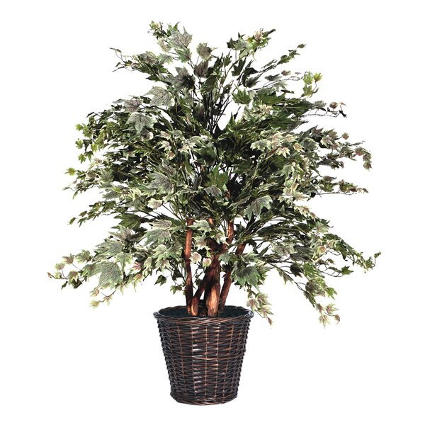 Floor Foliage Tree in Basket by Vickerman