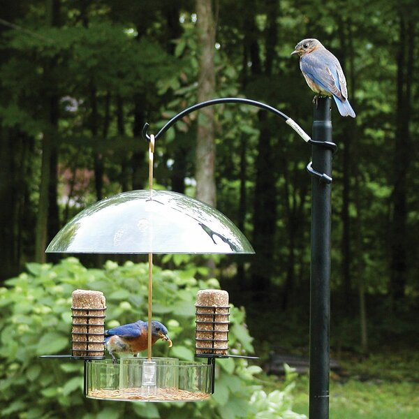 Supper Dome Bluebird Suet Bird Feeder by Birds Cho