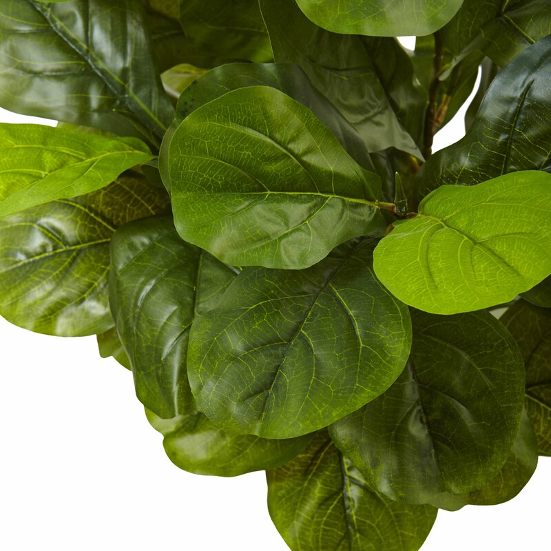 Willa Arlo Interiors Fiddle Leaf Fig Plant In Planter