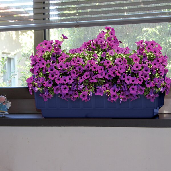 Fence Plastic Pot Planter (Set of 2) by ALMI
