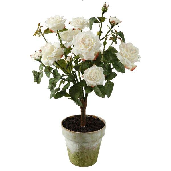 Potted Garden Rose by Birch Lane™
