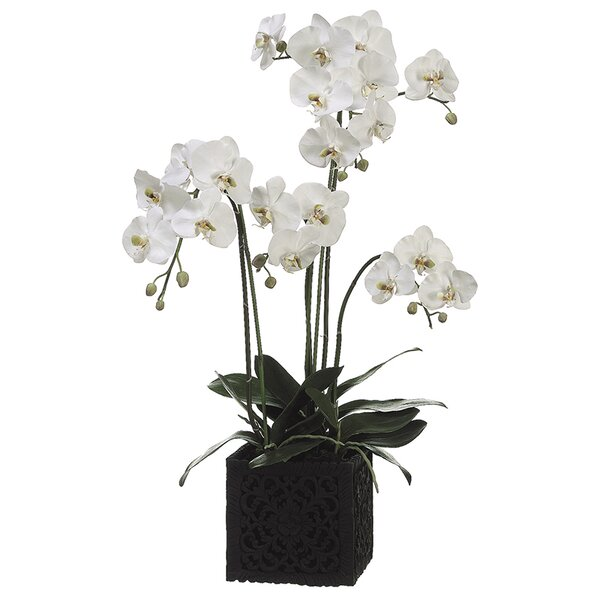 Phalaenopsis Faux Florals Plant by One Allium Way