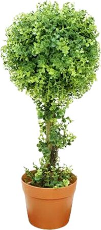 Two-Tone Artificial Boxwood Ball Topiary Tree in Pot by Northlight Seasonal