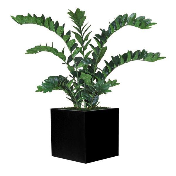 Square Zamia Foliage Plant in Planter by Bayou Breeze