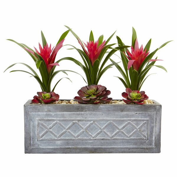 Ginger and Desktop Succulent Plant in Planter by Wrought Studio