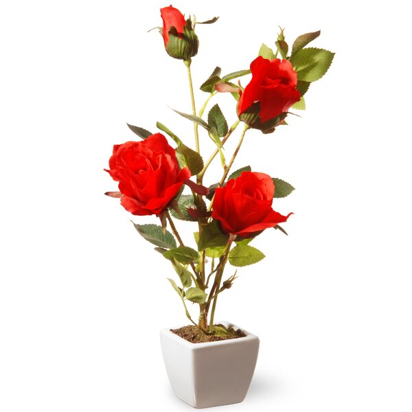 Rose Flowers in Pot by National Tree Co.