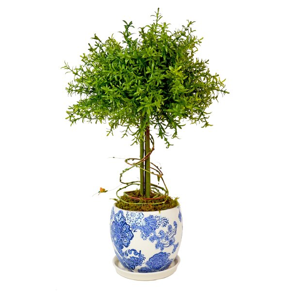 Small Leaf Feather Plant Topiary by Creative Displays, Inc.