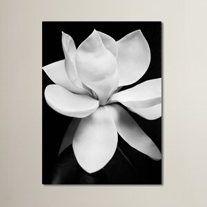 Magnolia Photographic Print on Wrapped Canvas by Trademark Fine Art