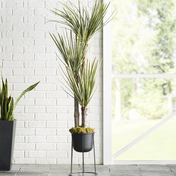 Silk Yucca Tree in Pot by Mercury Row