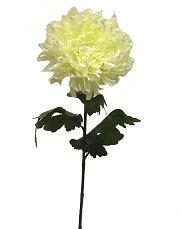 Chrysanthemum Stem by Winston Porter