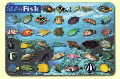 Saltwater Fish Placemat (Set of 4) by Painless Learning Placemats