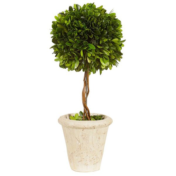 Floor Boxwood Topiary in Pot by Wrought Studio