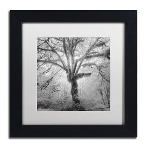 Lightning Tree II by Moises Levy Framed Photographic Print by Trademark Fine Art