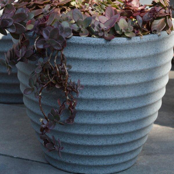 Citrana Resin Pot Planter by Ebern Designs
