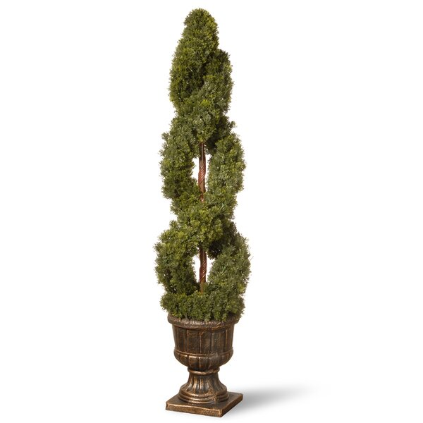 Double Cedar Spiral Topiary in Urn by National Tree Co.