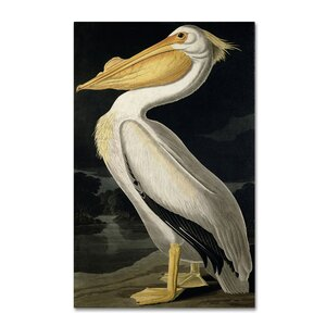 American White Pelican by John James Audubon Painting Print on Wrapped Canvas by Trademark Fine Art