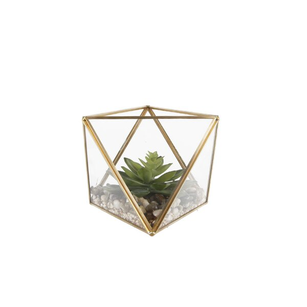 Desktop Succulent Plant in Glass Terrarium by Mistana