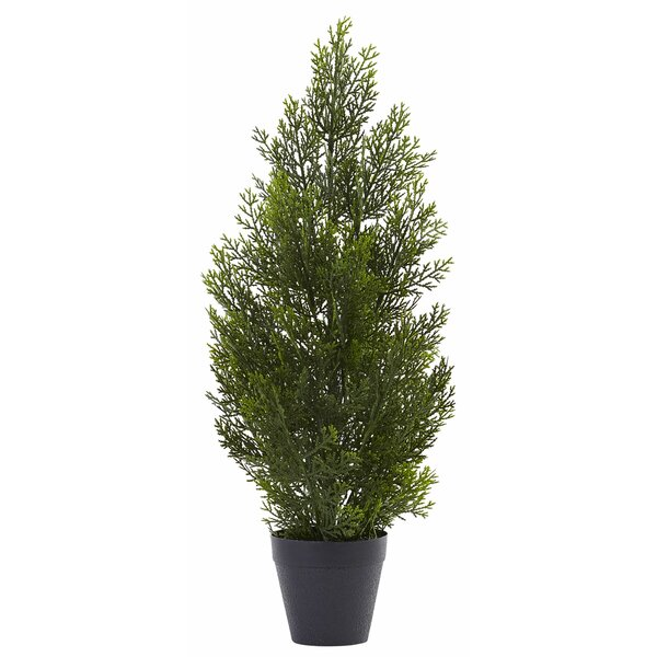Mini Cedar Pine Tree in Pot by Andover Mills