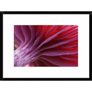 'Mushroom Detail of Underside Showing Gills' Framed Photographic Print by Global Gallery