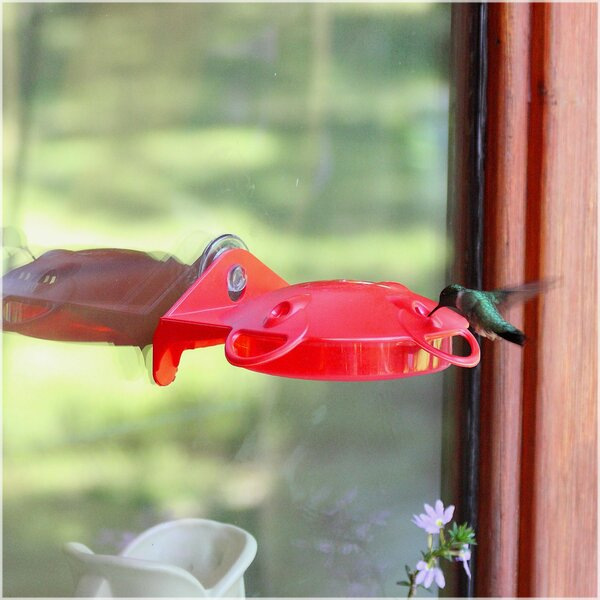 Window Mount Hummingbird Feeder by Garden Song