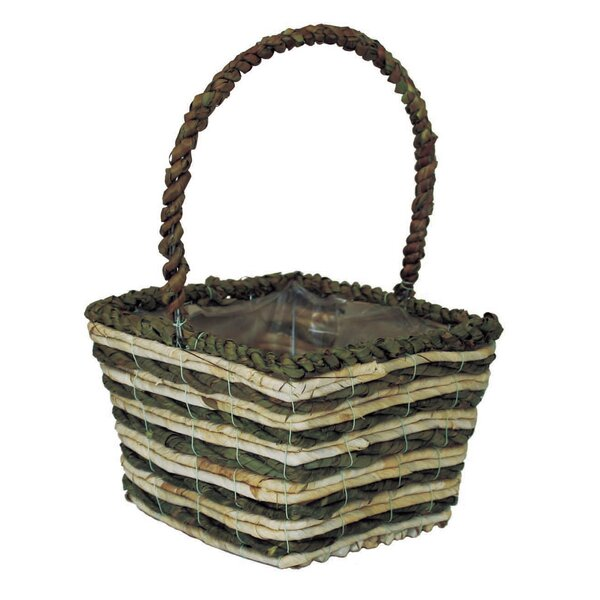 Lilia Square Palm and Maize Pot Planter by August Grove