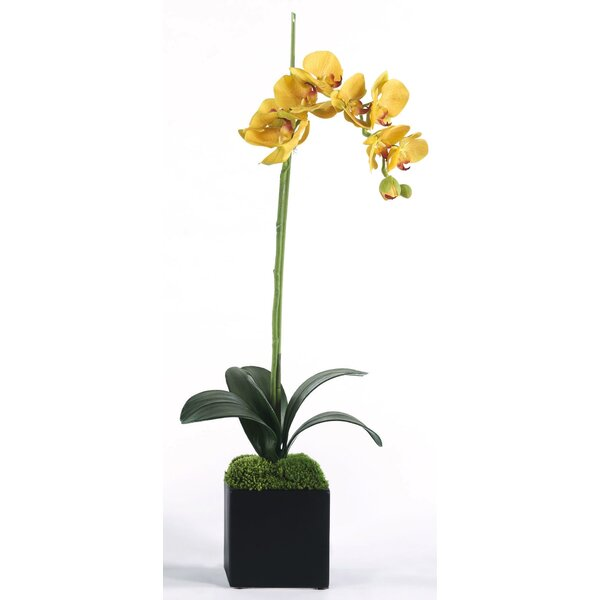 Yellow Single Orchid Floral Arrangement in Planter by Latitude Run