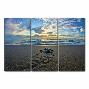 'Turtle' 3 Piece Photographic Print Set by Highland Dunes