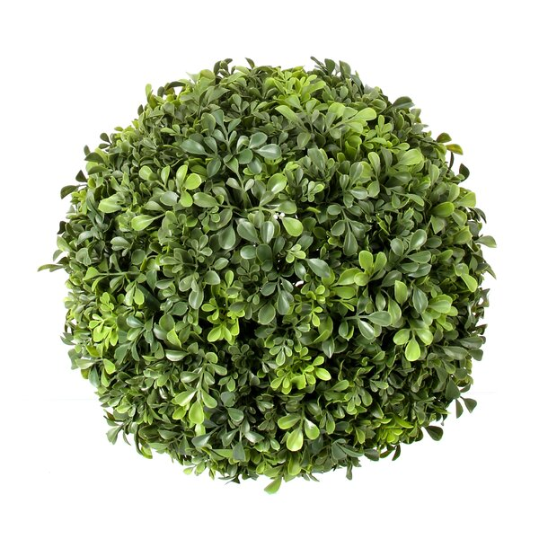 Plastic Ball Boxwood Topiary by Charlton Home