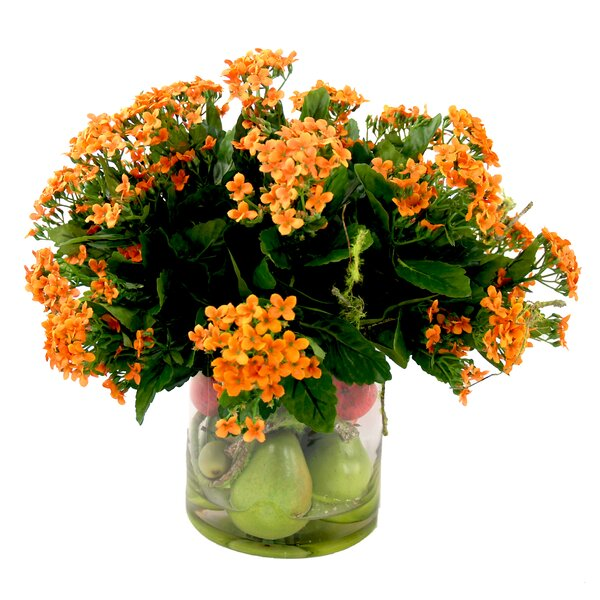 Kalanchoe Centerpiece in Pot by Darby Home Co