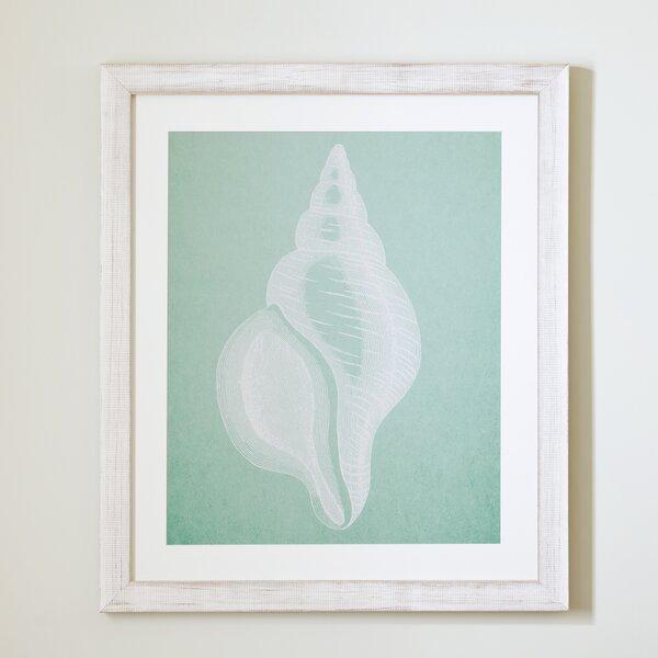 Seafoam Seashell Framed Print II by Birch Lane™