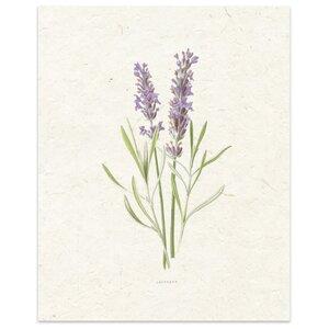 'Lavender' by Terri Ellis Painting Print in Tan by