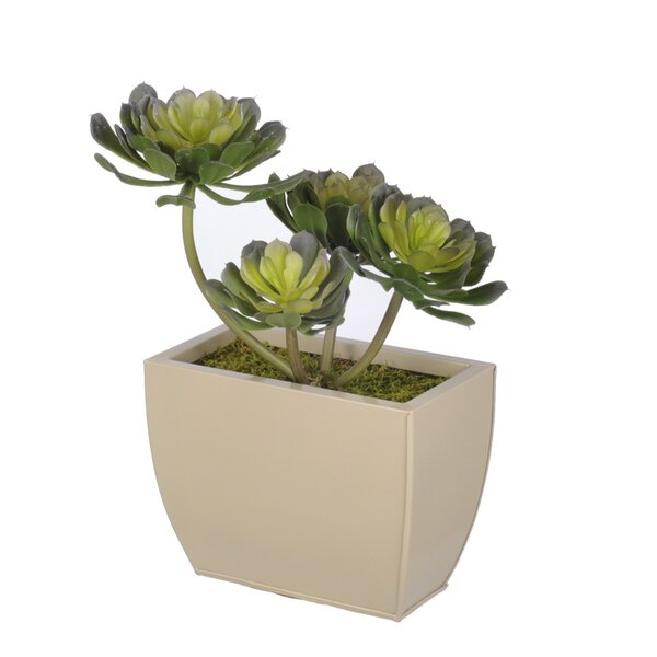 Artificial Aeonium Succulent Desk Top Plant in Decorative Vase by House of Silk Flowers Inc.