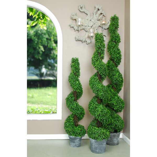 Spiral Boxwood Topiary in Planter by August Grove