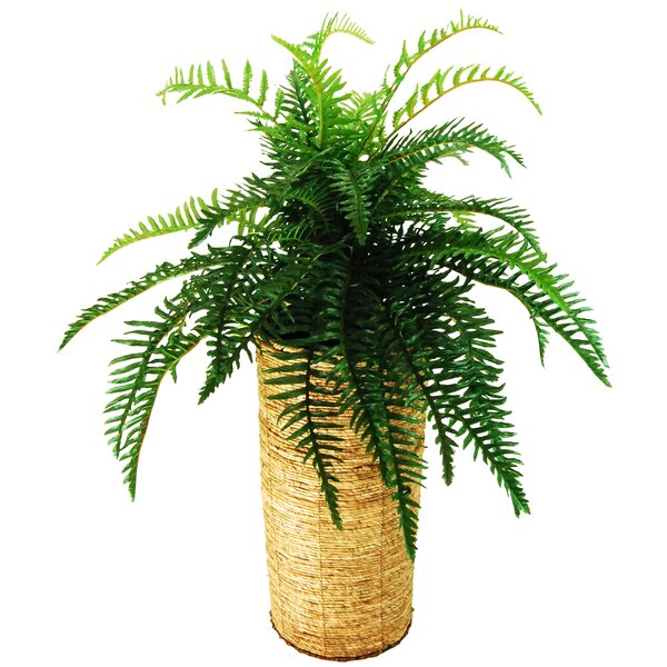 River Fern Plant in Basket by LCG Florals