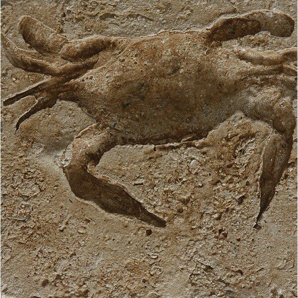6 x 6 SeaStone Cement Crab Fossil Impression Square Edge Medallion Tile in Buff by Matrix-Z