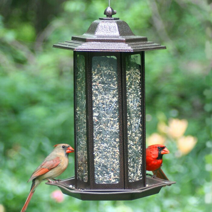 Tall Tulip Garden Lantern Hopper Bird Feeder