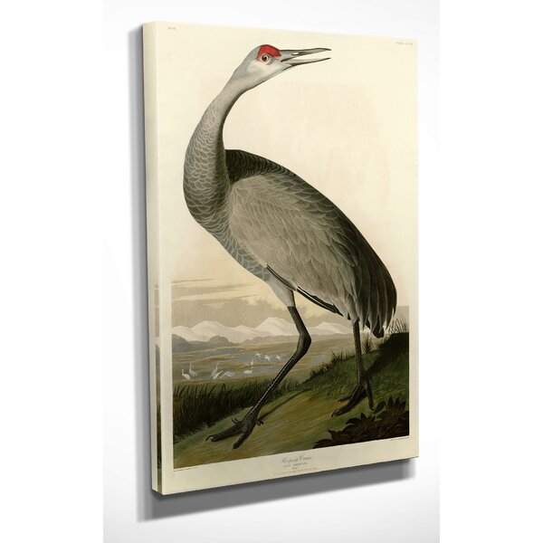 Whooping Crane by Audubon Graphic Art on Wrapped Canvas by Wexford Home