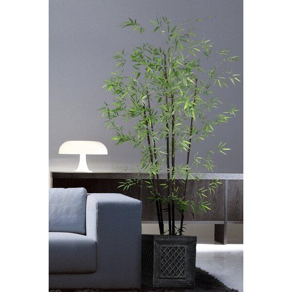 Floor Bamboo Tree in Planter by Bloomsbury Market