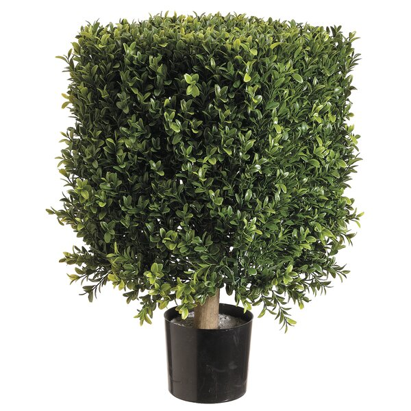Square Boxwood Topiary in Pot by Canora Grey