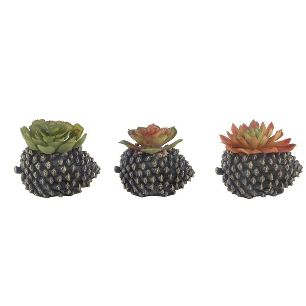 3 Piece Pinecone Succulent Plant in Pot Set by Millwood Pines