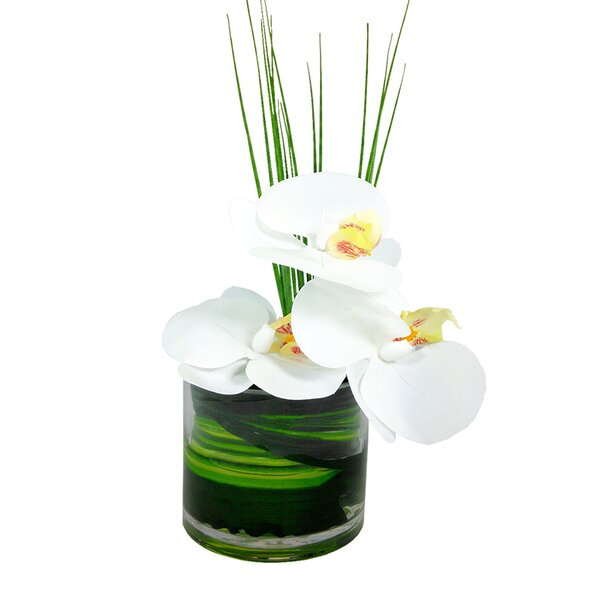Phalaenopsis Orchid Floral Arrangement in Vase by Bloomsbury Market
