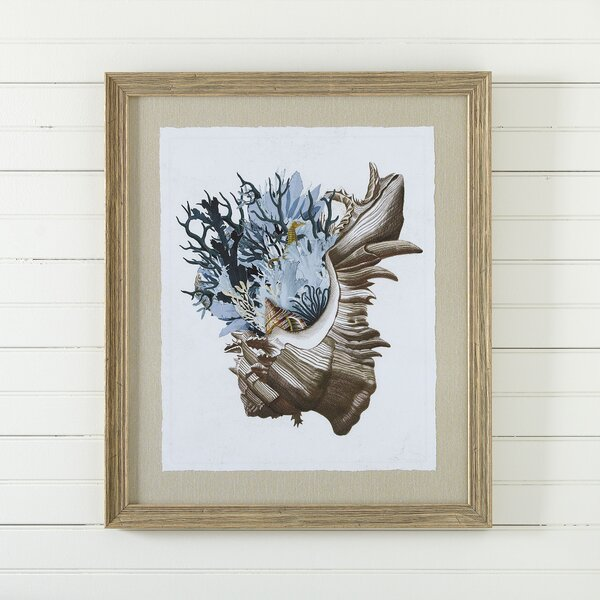 Mollusk Framed Print III by Birch Lane™