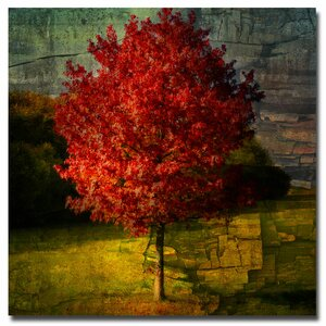 'Autumn Red' by Philippe Sainte-Laudy Framed Painting Print on Wrapped Canvas by Trademark Fine Art