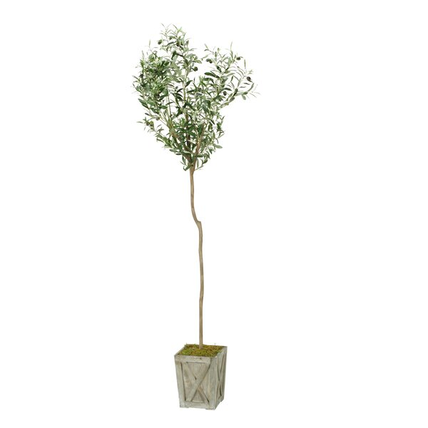 Olive Tree in Planter by Fleur De Lis Living