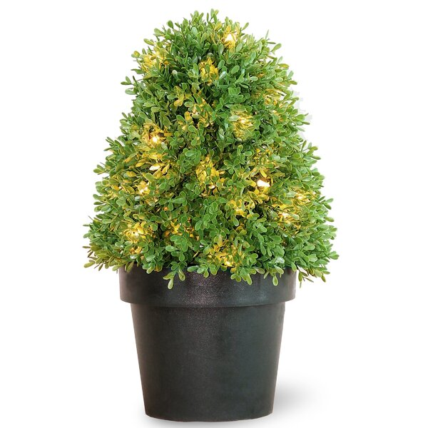 Pre-Lit Round Tapered Boxwood Topiary in Pot by National Tree Co.