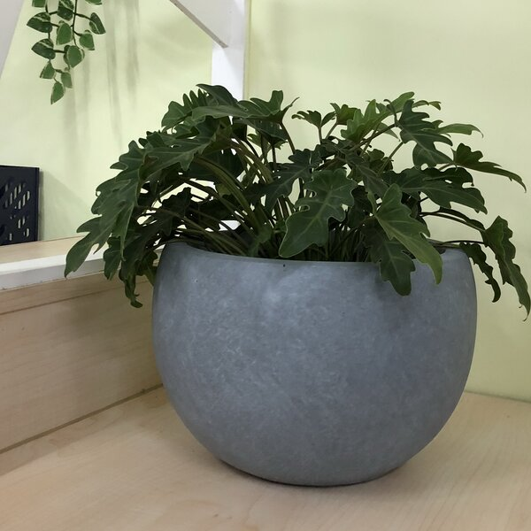 Gagnon Bowl Pot Planter by Williston Forge