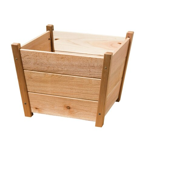 Phat Tommy Cedar Pot Planter by Buyers Choice
